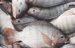 بالاخره ماهی تیلاپیا بخوریم یا نخوریم؟